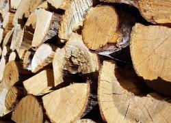 Combustible bois bûche